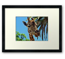 African Giraffe Framed Print
