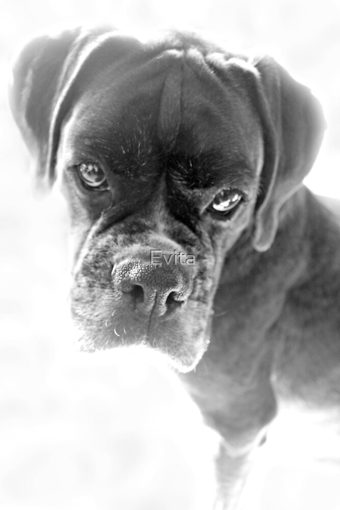 They Tell Me I'm Not Longer A Puppy by Evita