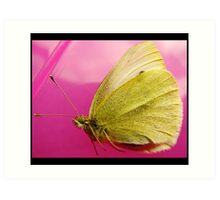 adult cabbage white/yellow butterfly Art Print
