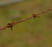 Rusty Barb Wire by Shane Field