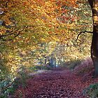 Autumn Avenue by John Keates