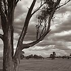 Stormy Sunset - Young, NSW  by cassieyoung