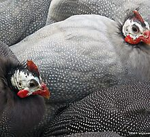 Guinea Fowl 4 by BillK