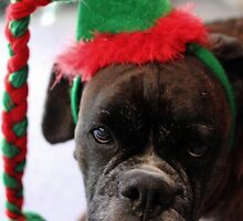 You've Got To Be Kidding! - Boxer Dogs Series by Evita