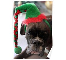 You've Got To Be Kidding! - Boxer Dogs Series Poster