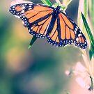 """""""Love is like a butterfly, it goes where it pleases and it pleases where it goes"""" by Aaron Radford"""