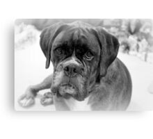 Contemplating My New Years Resolution ~ Boxer Dog Series Canvas Print