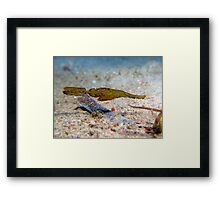 Robust Ghost Pipefish - Philippines Framed Print