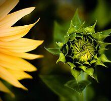 ...twirl and swirl... by Geoffrey Dunn