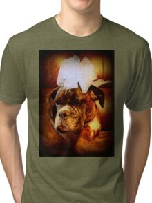 Boxer Dog With Bow - Boxer Dogs Series Tri-blend T-Shirt