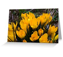 Yellow Crocus Greeting Card