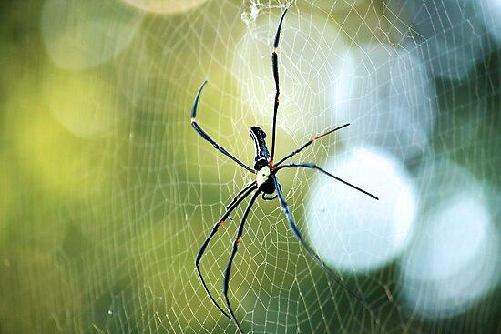 Boris the spider by rickvohra
