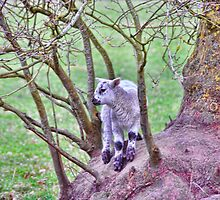 Baa..aaarking up the Wrong Tree by Alex Hardie