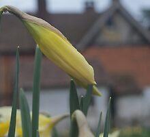 The Daffodils by graciescarlett