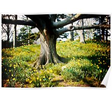 Tree in a Forest Surrounded by Wild Flowers Poster