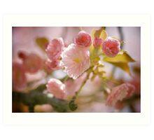 Cherry Blossoms from Queens Botanical Garden Art Print