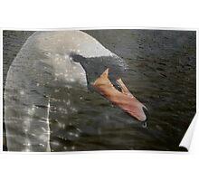Swan Lake? Poster