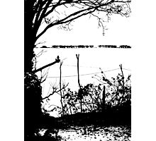 Blackbird and White Snow Photographic Print