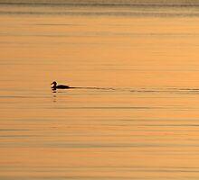 Morning swim by Rochelle Smith