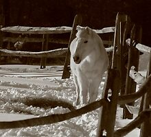 Who put this white stuff in my barnyard? by photobug923