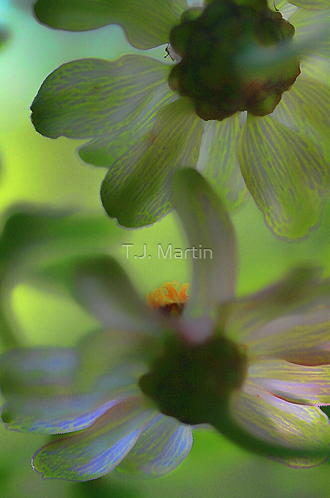 From Beneath The Potted Zinnias by T.J. Martin