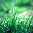 Soft blades of grass by rickvohra