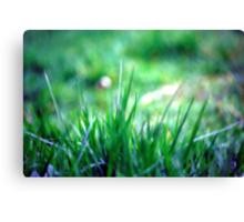 Soft blades of grass Canvas Print