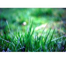 Soft blades of grass Photographic Print