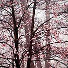 Blossom by Mary Ann Reilly