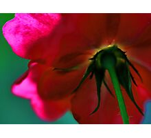 Beneath The Beauty Lies The Thorns Photographic Print