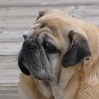 Dock Pug by Lori Hark