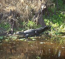 River Gator by Lori Hark