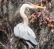 Heron St.Johns River by Lori Hark