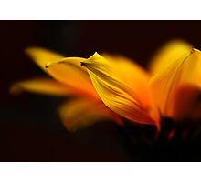 my little sunshine Photographic Print