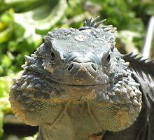 Izzy the Iguana by Lori Hark
