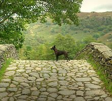 Dog on a Stone Bridge by Jamie  Green