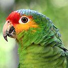 Red-lored Amazon Parrot  by Teresa Zieba