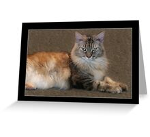 Catisfaction - 10month old Maine Coon Kitten - Jasper Greeting Card