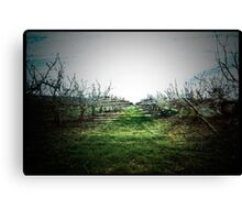 Pear Orchard Dreams. Canvas Print