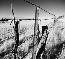 Rusty Wires by Michael Jeffery