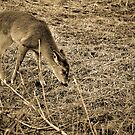Young Deer by Alexbo