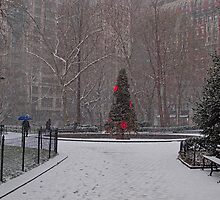 A Christmas Tree In the Snow, Madison Square Park, NYC by Chris Lord
