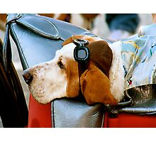 Lazy Dog with Aviator Cap and Goggles Photographic Print