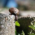 Small Steps Big Journey by Jennifer Potter