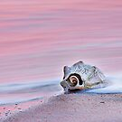 Seashell by the Seashore by Dan Waters