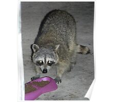 Raccoon's Full Bandito Image Poster