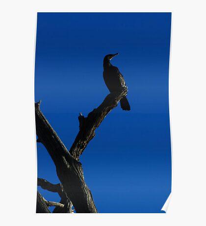 Regal Nature Poster
