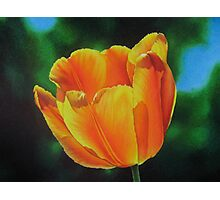 Tulip - Sun on a stem Photographic Print