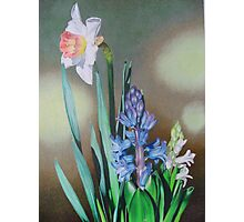 Narcissus and hyacinth Photographic Print