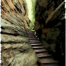 Natural Stairs by Teresa Zieba